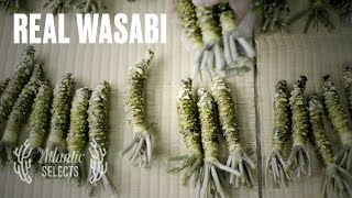 The Truth About Wasabi