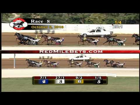 Red Mile Racetrack Race 8 10-6-2016