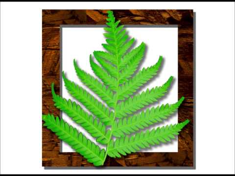 Fern Leaf - Metaphor for Resilience