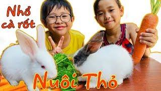Stin Dâu Chơi Nhổ Củ Cải Nuôi Thỏ Và Cho Thỏ Ăn (^_^) Dạy Bé Yêu Quý Động Vật