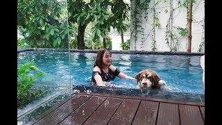 Chó Alaska Mật bị đẩy xuồng hồ bơi, đã sợ nước còn bị chủ troll - đi Đại Lải nghỉ mát Part 2 ^^