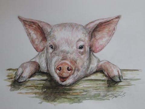 Watercolour painting of a Pig