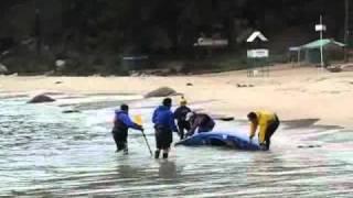 Prácticas en kayak de mar