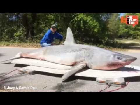Fisherman Catch World Record Shark, Eat It, Lose World Record - Smashpipe News