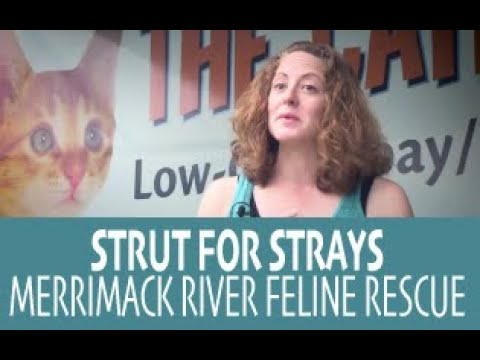 Purr View TV Show With Tonia Fleming Ep 006 'Strut For Strays 2015'