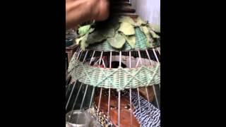 Chim đa đa- Huy AyunPa Gia Lai