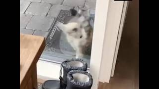 funny cats  Let me in. try not to laugh nov 2018