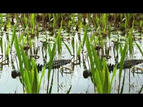 Alligator Kingdom 3D hsbs