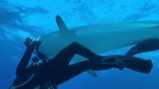 イタチザメにカメラを噛まれる