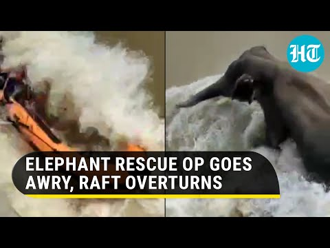 Video: Journalist dies during elephant rescue operation in flooded river as boat overturns