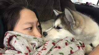 Dogs Waking Up Owners (HD) [Funny Pets]