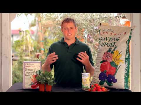 How To Plant Strawberries - Armstrong Garden Centers