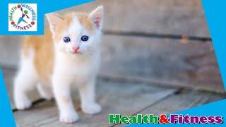 FDA warns of pet owners using animals to get opioids