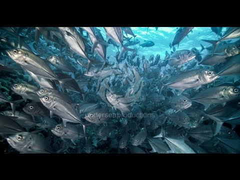 "4K UltraHD underwater video stock footage Demo Reel UHD 2160p ""Undersea Realm in 4K"""