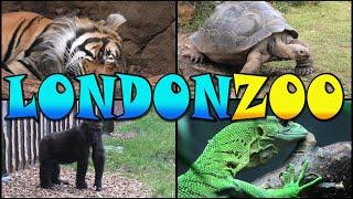 LONDON ZOO Walking Tour - England (4K)