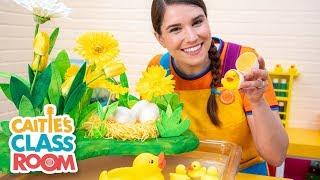 Caitie's Classroom Live  - Ducks!