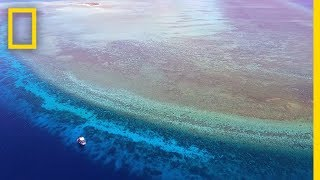 Explore One of the Most Pristine Coral Reefs in the World | National Geographic