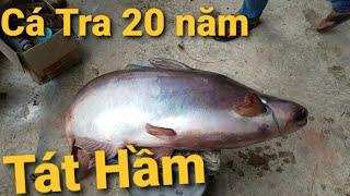 Bắt cá Tra cá Tai Tượng loại lớn sau hơn 20 năm ( DỌN SẠCH HỒ) Cá khủng nuổi bằng cơm thừa