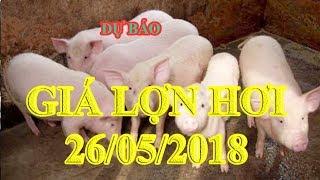 Dự báo giá lợn hơi 26/5/2018   Giá lợn hơi 26/5/2018   Tin Tức 24h