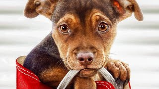 A DOG'S WAY HOME Trailer (2019) Bryce Dallas Howard