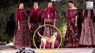 Street dog enters Rohit Bal's Fashion Show, steals limelig..