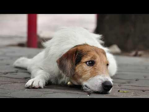 Rimedi erboristici per animali anziani