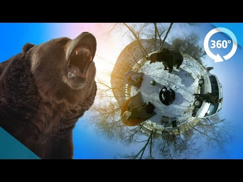 Survive a Bear Attack in VR! ( 360 Video )