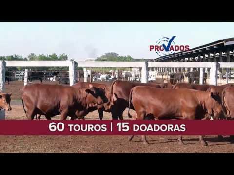 VT Leilão PROVADOS CP 2016