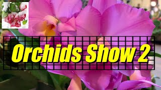Soos Orchids Show 2019 (2) Slideshow