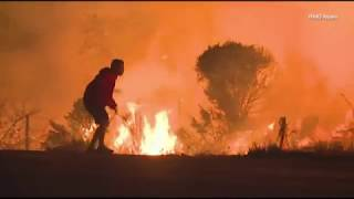 Man saves bunny from Ventura County fire