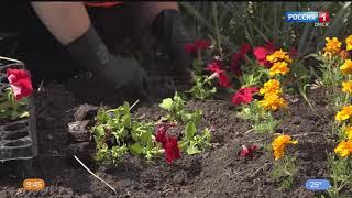 В Омске высадили более 700 тысяч цветов