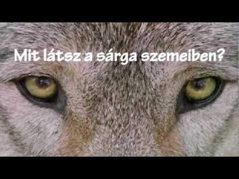 Baixar David Guetta - She Wolf (Falling to Pieces ft. Sia) (magyar szöveg)