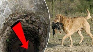 Chú chó ngày nào cũng mang đồ ăn thả xuống giếng cạn, khi nhìn xuống dưới đáy thì ai cũng bất ngờ