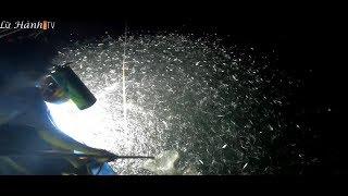 Đi câu mực bất ngờ gặp đàn cá khổng lồ/Trải nghiệm cuộc sống ngư dân/ Lữ Hành Tv