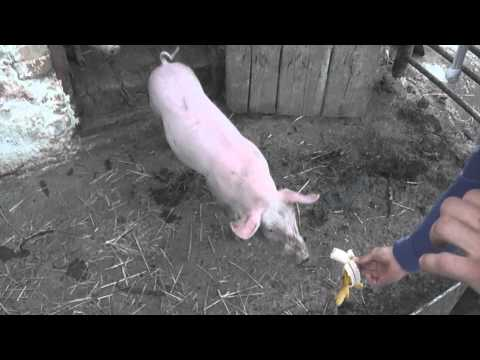 Video pozvánka Spišské Vlachy
