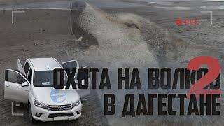 Охота на волков в Дагестане, часть вторая.