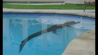 8 Bizarre Things People Found in Their Pool