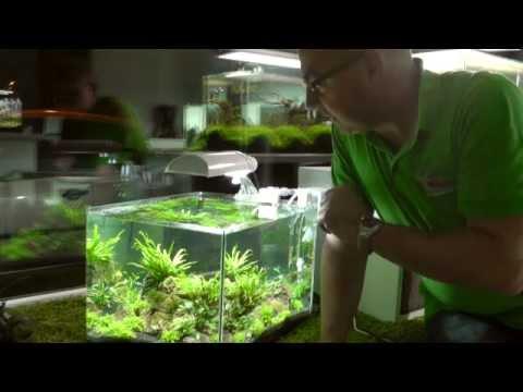 aquascaping aquarium scaper 39 s tank youtube. Black Bedroom Furniture Sets. Home Design Ideas