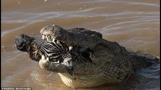 National Geographic Wild - Fight To Survive - Animal Wildlife Documentary - Natgeo Wild