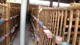 Nhà Phân Phối Chim Bồ Câu Pháp Giống - 0913503808