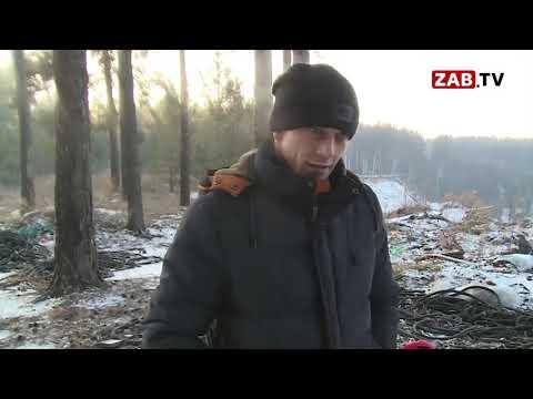 Скотомогильник в Забайкальском крае