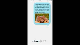 Ask.Vet u2013 My Diabetic Cat is Hungry All The Time. What Can I Feed Him?