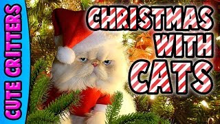 Merry Christmas with Cats Compilation | Funny Festive Fails | Best Collection 2017