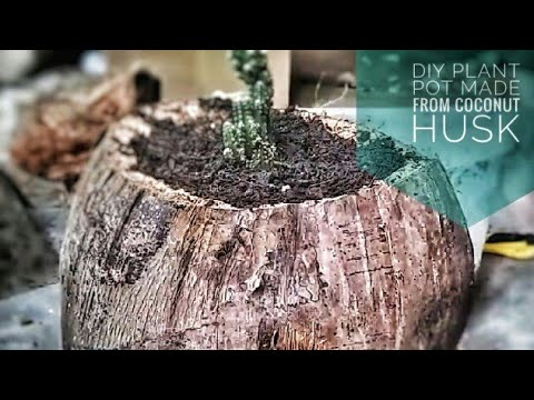 DIY Plant Pots Made From Coconut Husk