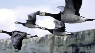 Makrokosmos - The paper parrot