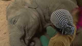 Ova žena udarila je slona crvenom krpom… No ono što je slon uradio ostaviće vas bez riječi! (VIDEO)