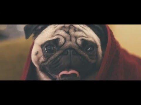 Vision Direct - A Pug's Christmas