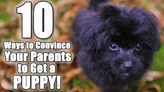 """10 Ways to Convince Your Parents to Get a Dog 