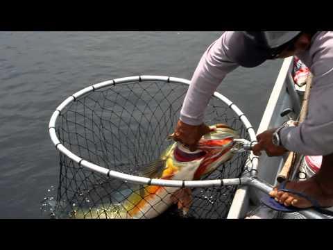 Амазонская рыбалка