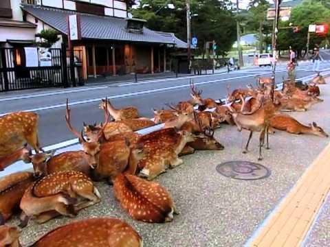 1000 jelena na putu